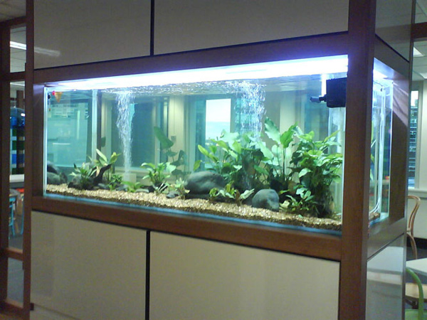 Cr ation sur mesure d 39 aquariums grand format - Meuble aquarium sur mesure ...
